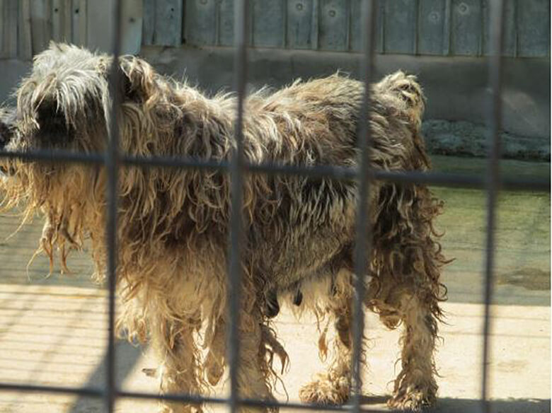 This Year's Horrible Hundred Report Exposes Cruelty at Puppy