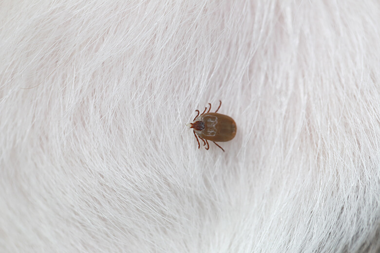 how to get rid of ticks and mosquitoes