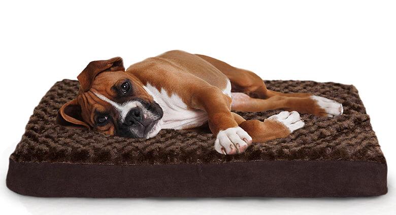 Sleep 6 Of The Best Orthopedic Dog Beds On Market