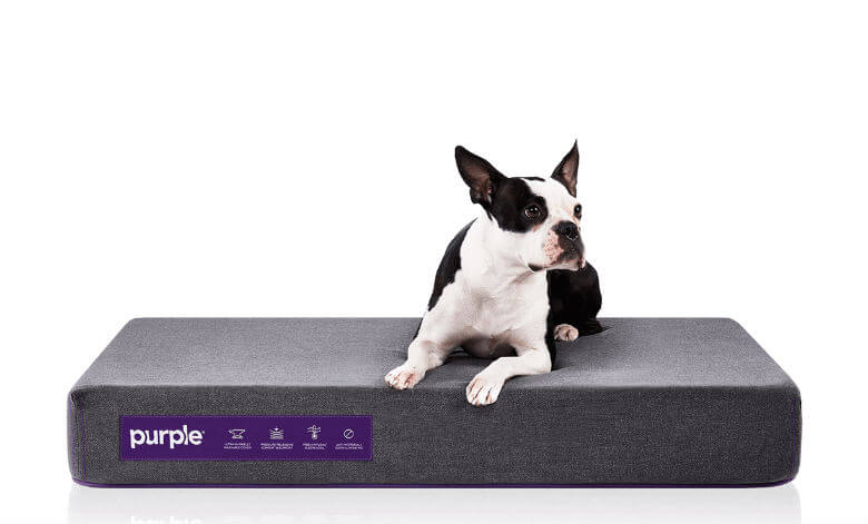 Sleep Tight 6 Of The Best Orthopedic Dog Beds On The