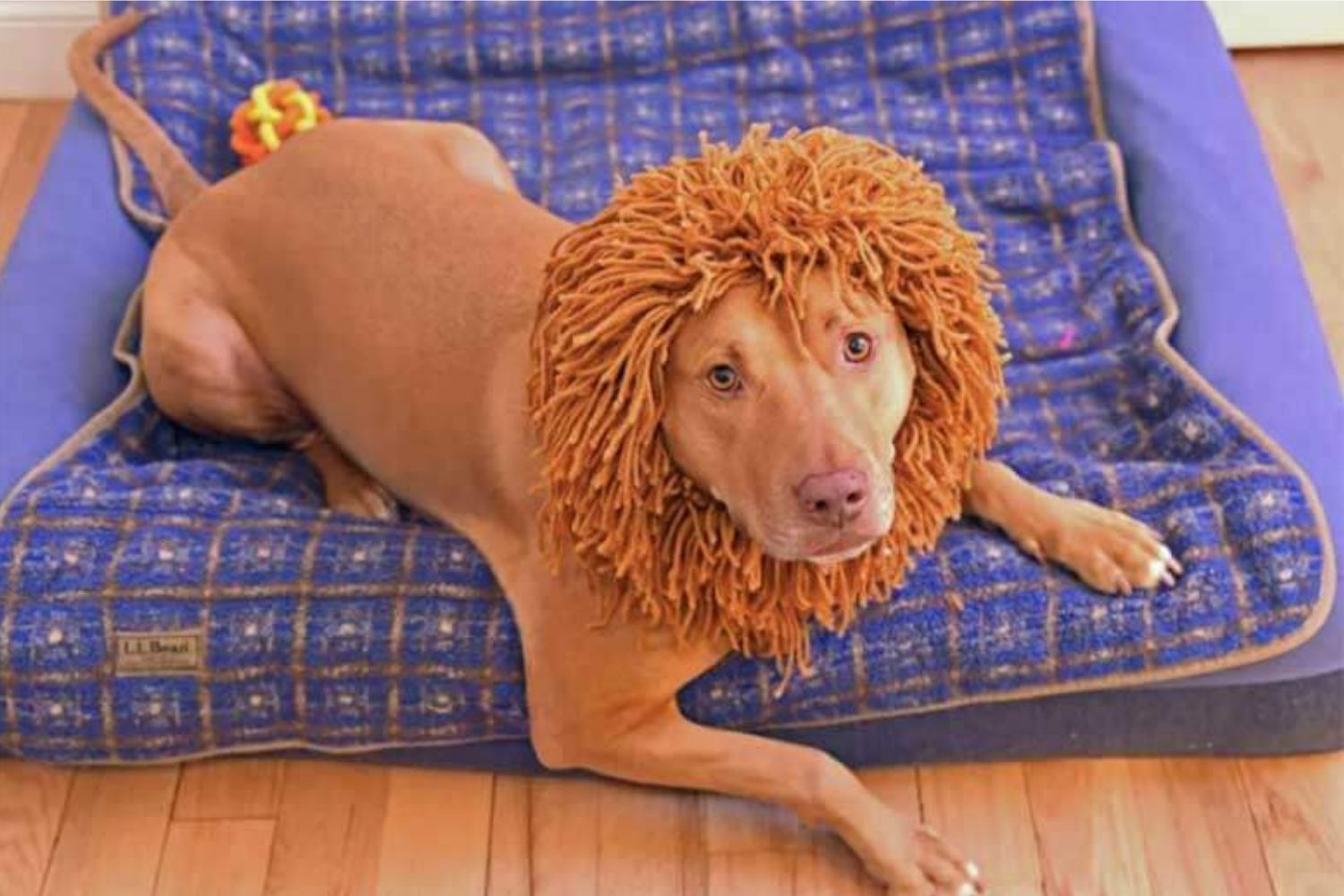 Have Your Dog Stand Out This Halloween With These Super Creative DIY Costumes