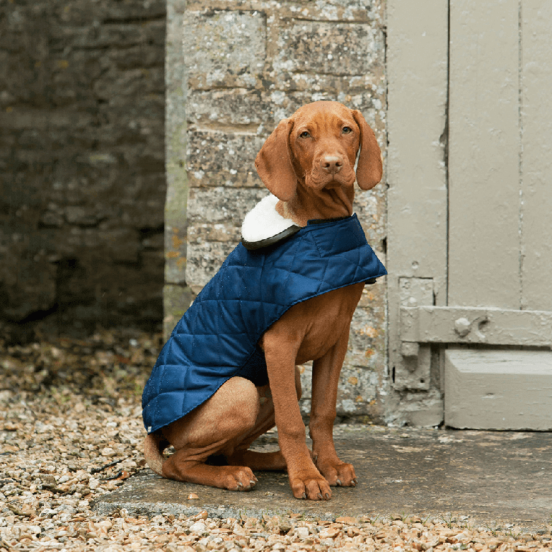 ab5562c1eb2d The Must-Have Products to Keep Your Dog Safe and Warm During the ...