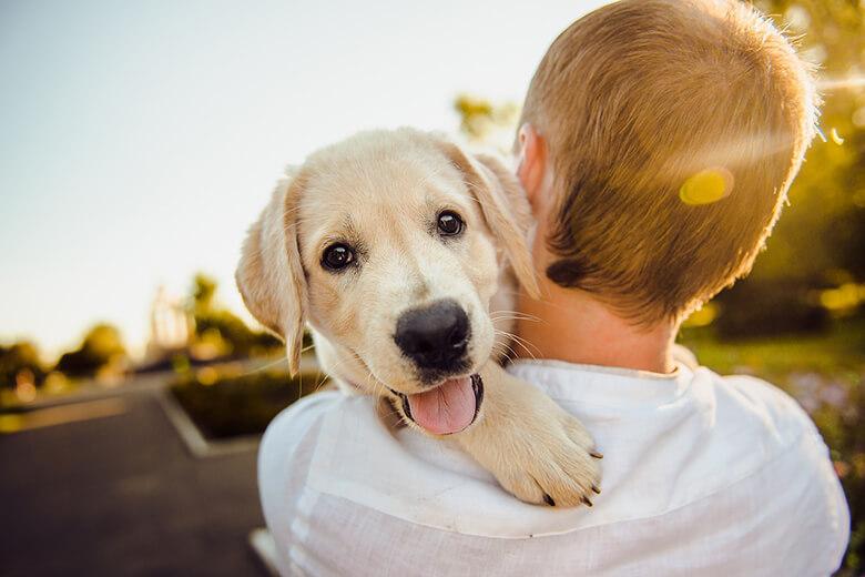 happy dog ile ilgili görsel sonucu