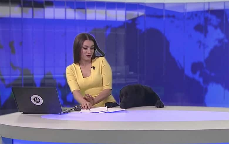 Newscaster Gets a Surprise Guest Anchor: An Adorable Black Lab