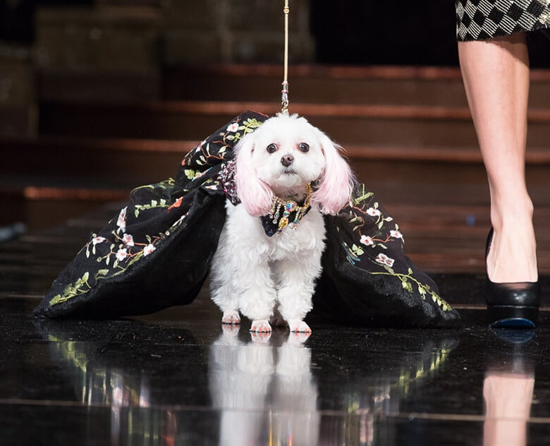 Dogs Steal the Spotlight at This NYFW Show