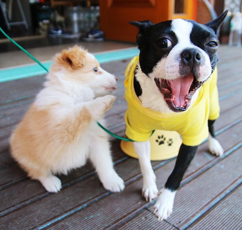 A True Dog-Friendly Restaurant Set to Open in Brooklyn Next Year