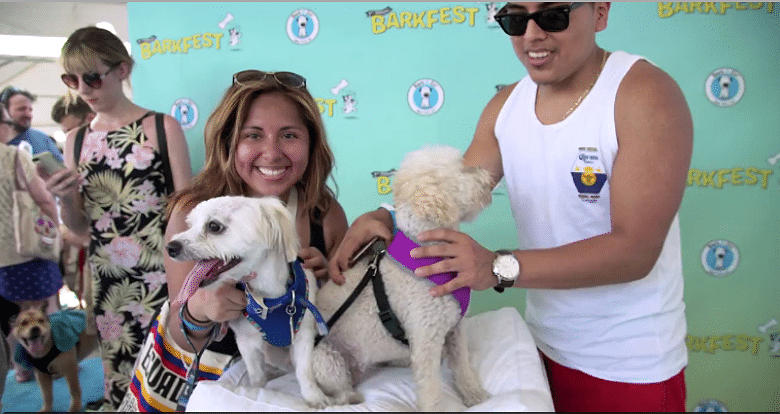 The 'World's Fair' for Dogs Is Happening This Weekend in New York City