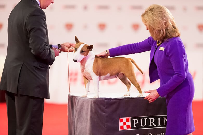 Hollywood to Host Westminster-Like Dog Show