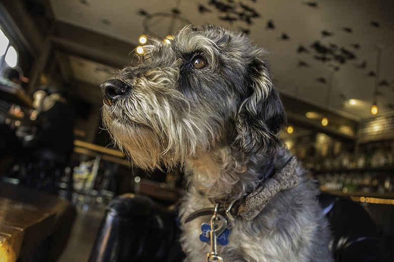 San Franciscans, Follow Your Nose to the Dog-Friendly Bloodhound Bar