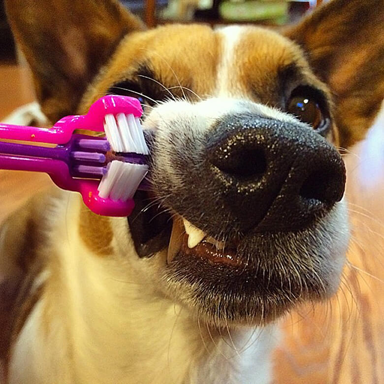 How to Clean Your Dog's Teeth Without Him Absolutely Hating You