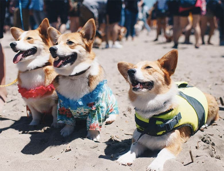 This Summer's Corgi Con Was the Biggest Ever
