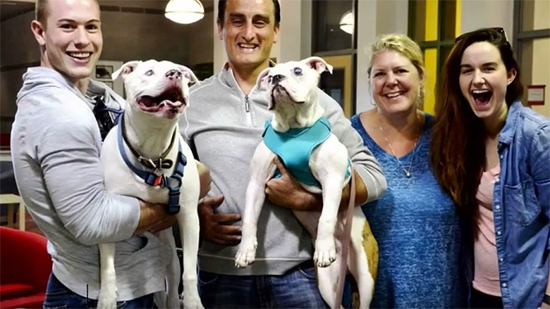 couple adopts blind puppy for their blind dog