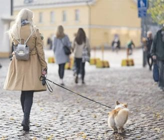 walking dog in finland