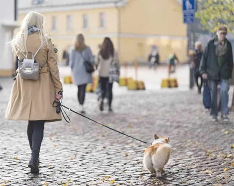 walking dog in finland