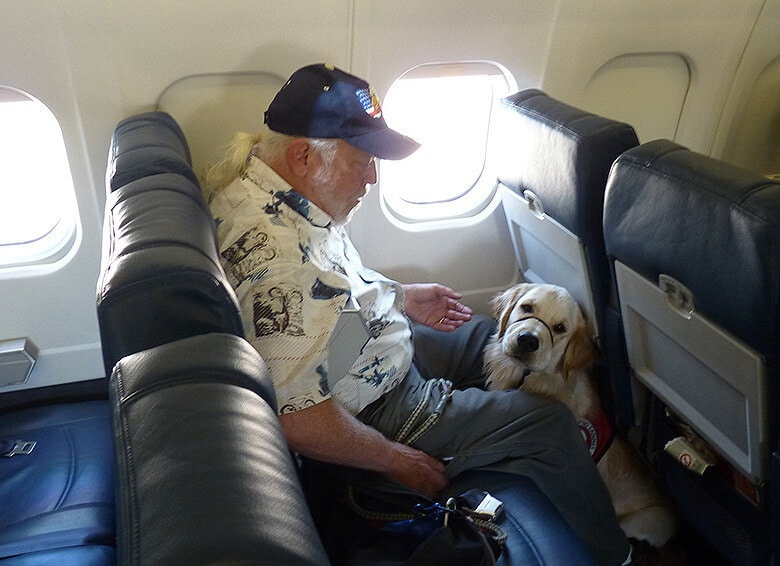 Delta Changes Its Policy for Dogs Flying on Its Airplanes