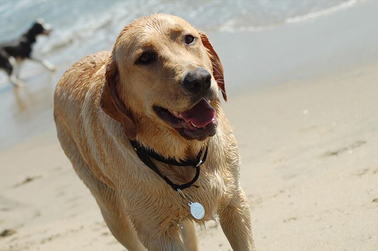 dog at newport beach|