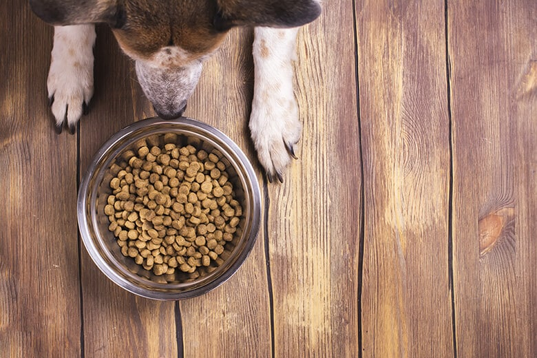Here's What Is in Dog Food That Causes Allergies -- and What to Do About It