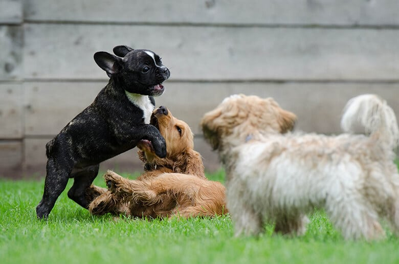 Yawn. The Most Popular Dog Names in New York City Are Quite Boring
