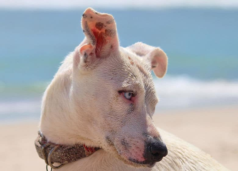 Yes, Your Dog Needs Sunscreen