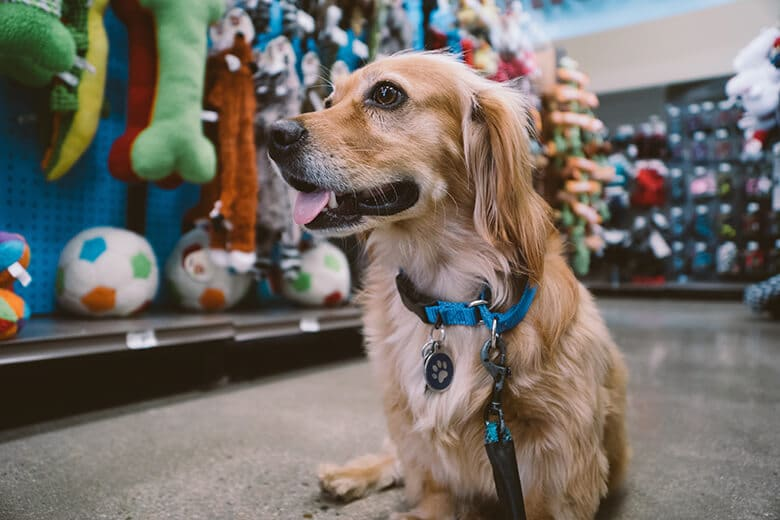 The Two Major Hazards You Need to Know About When Choosing Your Dog's Toys