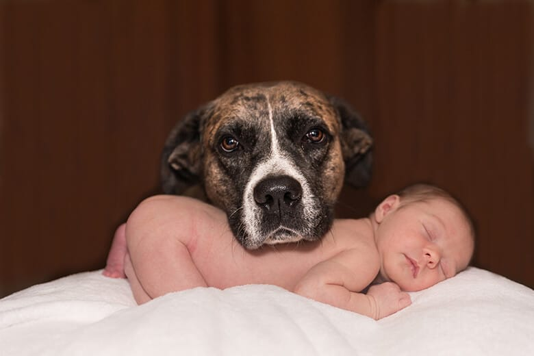 Dogs Could Reduce Allergies and Likelihood of Obesity in Children