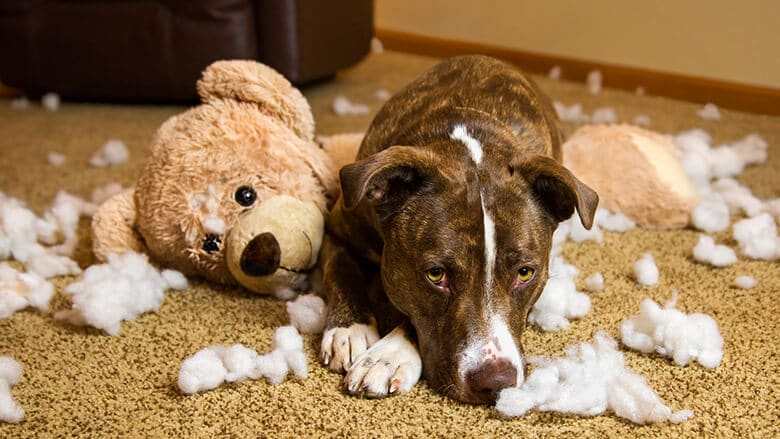 What That Guilty Expression on Your Dog's Face Really Means