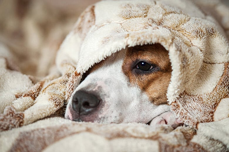 Here's How to Tell If Your Dog Has a Cold -- and What to Do About It