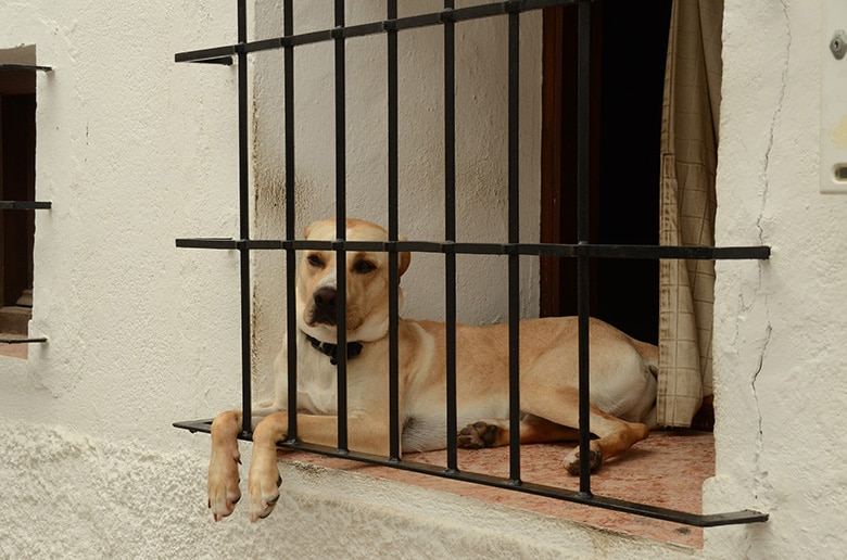 How to Help Your Dog When Your House Gets Foreclosed On