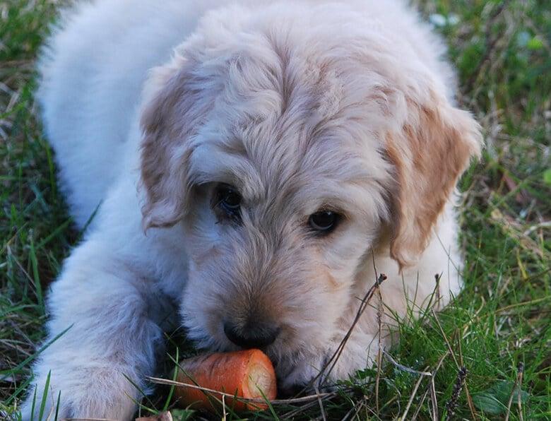 7 Natural Ways to Stop Bad Dog Breath