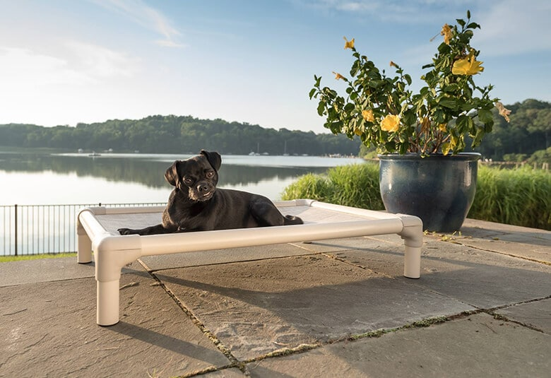 The Reasons Why You Should Invest in an Elevated Dog Bed – and the Ones We Recommend