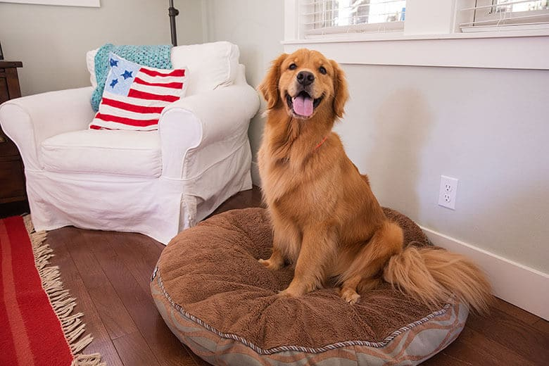 The Best Tips for Keeping Your Dog Safe on July 4th