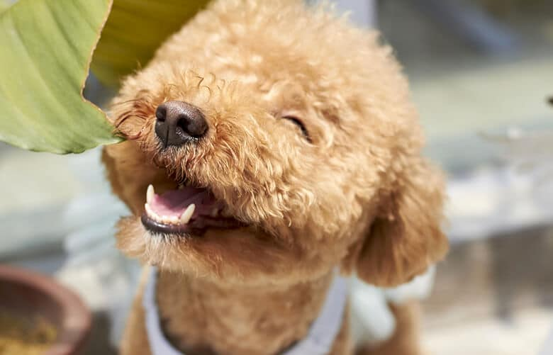 Here's How to Keep Your Dog's Mouthy Healthy Between Vet Cleanings