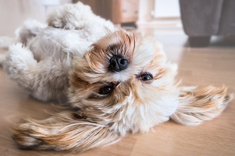 4 Ways To Get Your Hyperactive Crazy Dog To Calm Down,Cheapest City To Buy A House In Arizona