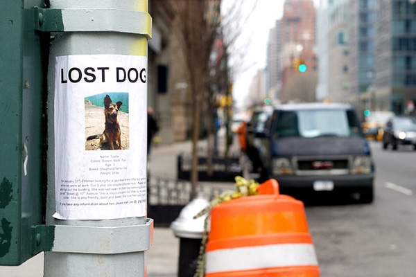 Lost Dog image by Billie Ward