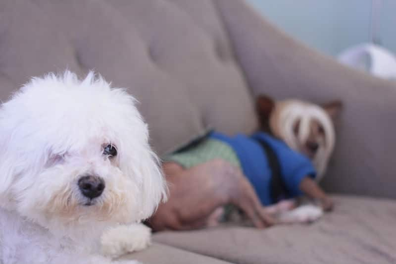 From Doggie Daycare to Animal Healing and Telepathy, This Place Has Something for Everyone