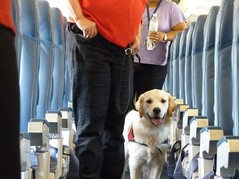 Emotional Support Dogs Will No Longer Be Allowed on Flights