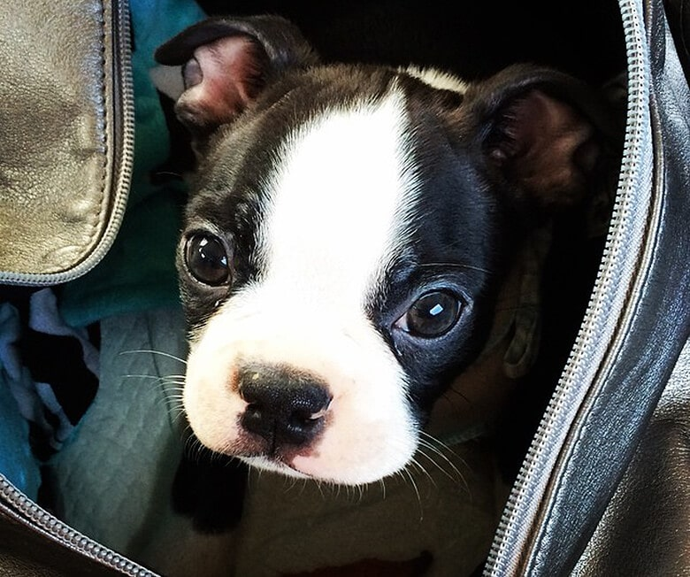 The Pet Polices of Top Airlines You Need to Know About