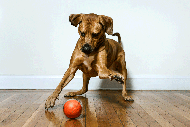 Here's a Toy That Will Let You Play With Your Dog From Afar