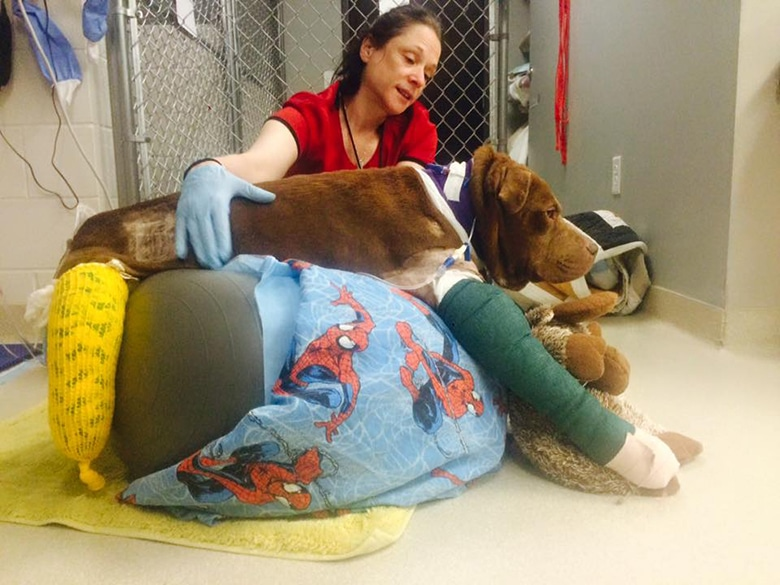        bait dog and amputation              a bait dog at a vet  
