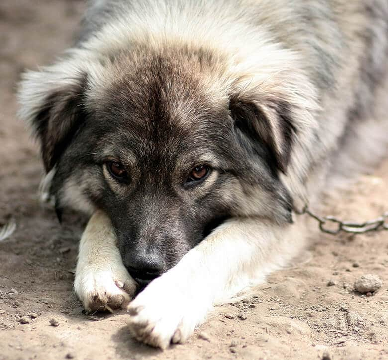 See Something, Say Something: How to Report Animal Cruelty