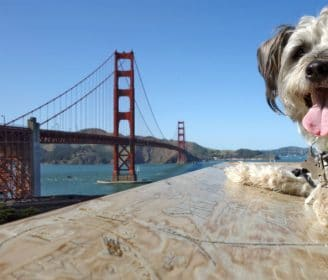 San Francisco dog-friendly city|