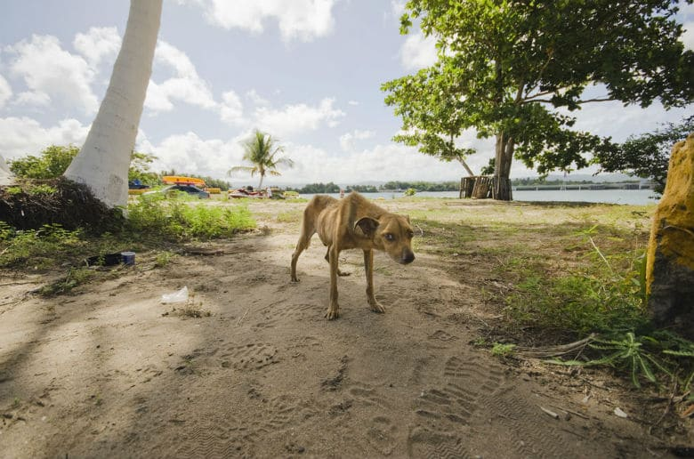 Sophie Gamand's Dead Dog Beach series|