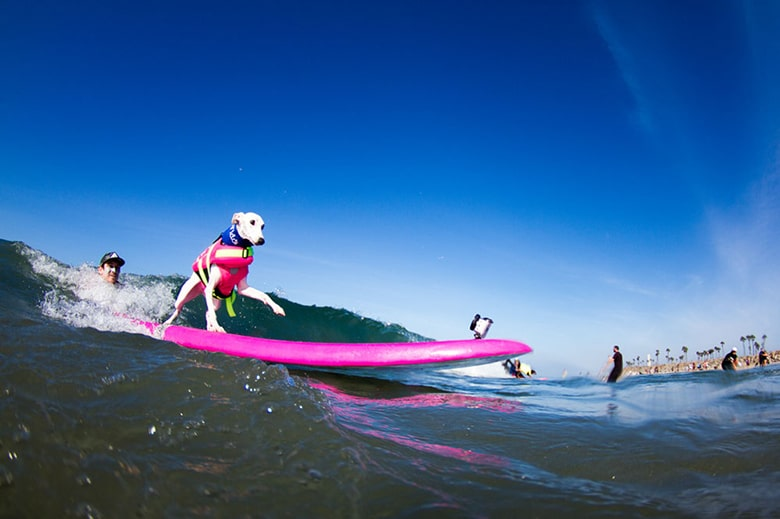 Hang 10: Dogs to Compete In Huge Surfing Event in Southern California