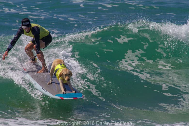Dogs Show Off Their Surfing Skills In 10 Amazing Shots