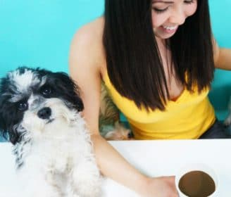 The Dog Cafe|The Dog Cafe|The Dog Cafe|The Dog Cafe|The Dog Cafe|The Dog Cafe|The Dog Cafe|