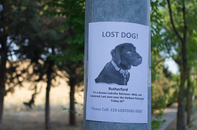 What to Do If You See a Lost Dog