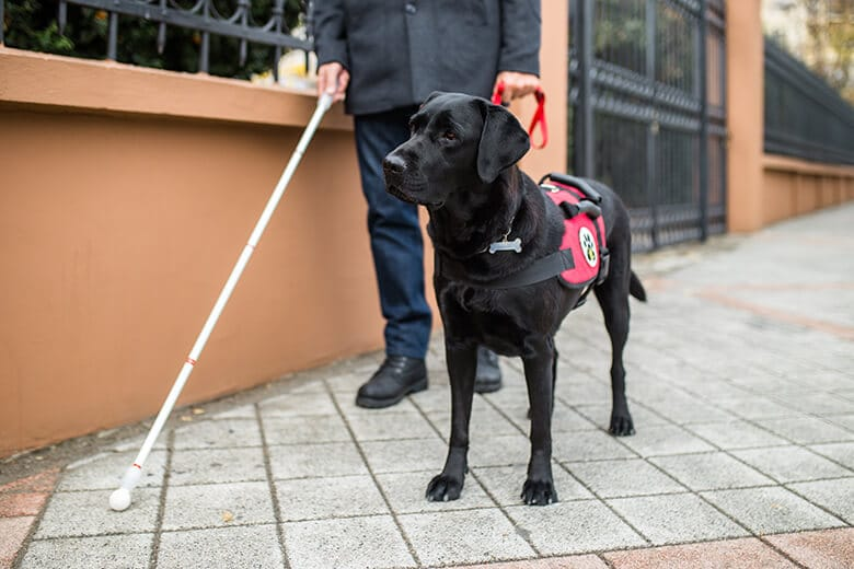 Here's What Not to Do When You See a Service Dog at Work