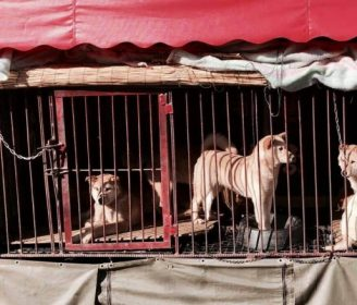 Shenzhen Becomes First Chinese City to Ban the Dog Meat Trade