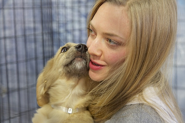 NYC's Best Friends Animal Society Super Adoption Was a Super Success