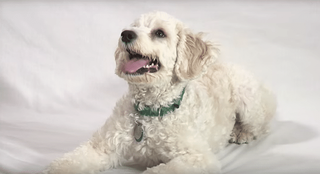 Amy Poehler's 'Heavy Petting' Is a Funny Series About Adoptable Dogs